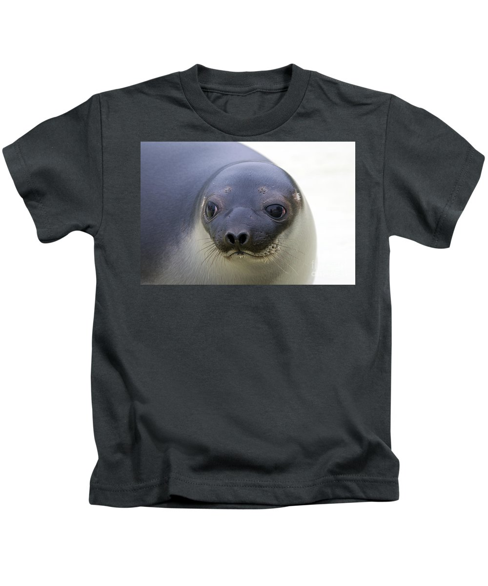 Hooded Seal Kids T-Shirt featuring the photograph 110714p130 by Arterra Picture Library