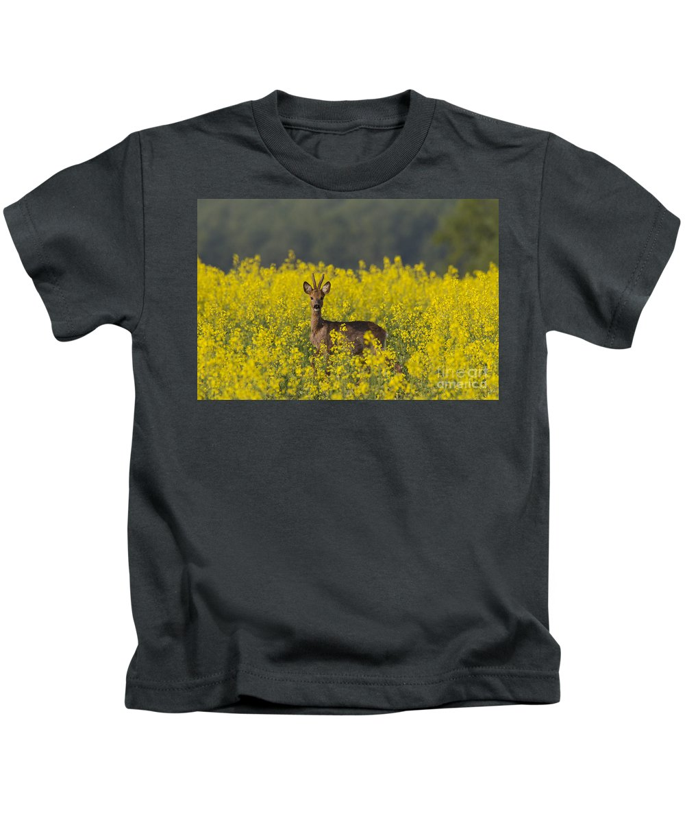 Roe Deer Kids T-Shirt featuring the photograph 110714p143 by Arterra Picture Library
