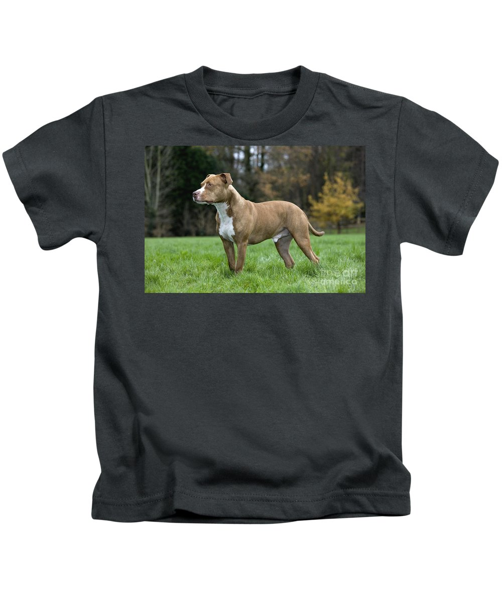 American Staffordshire Terrier Kids T-Shirt featuring the photograph 111216p245 by Arterra Picture Library