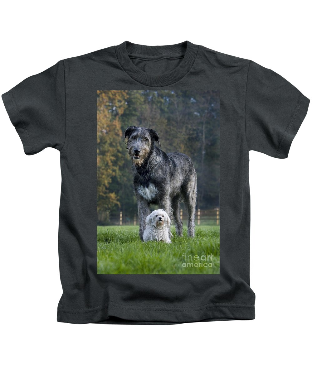 Irish Wolfhound Kids T-Shirt featuring the photograph 111216p251 by Arterra Picture Library