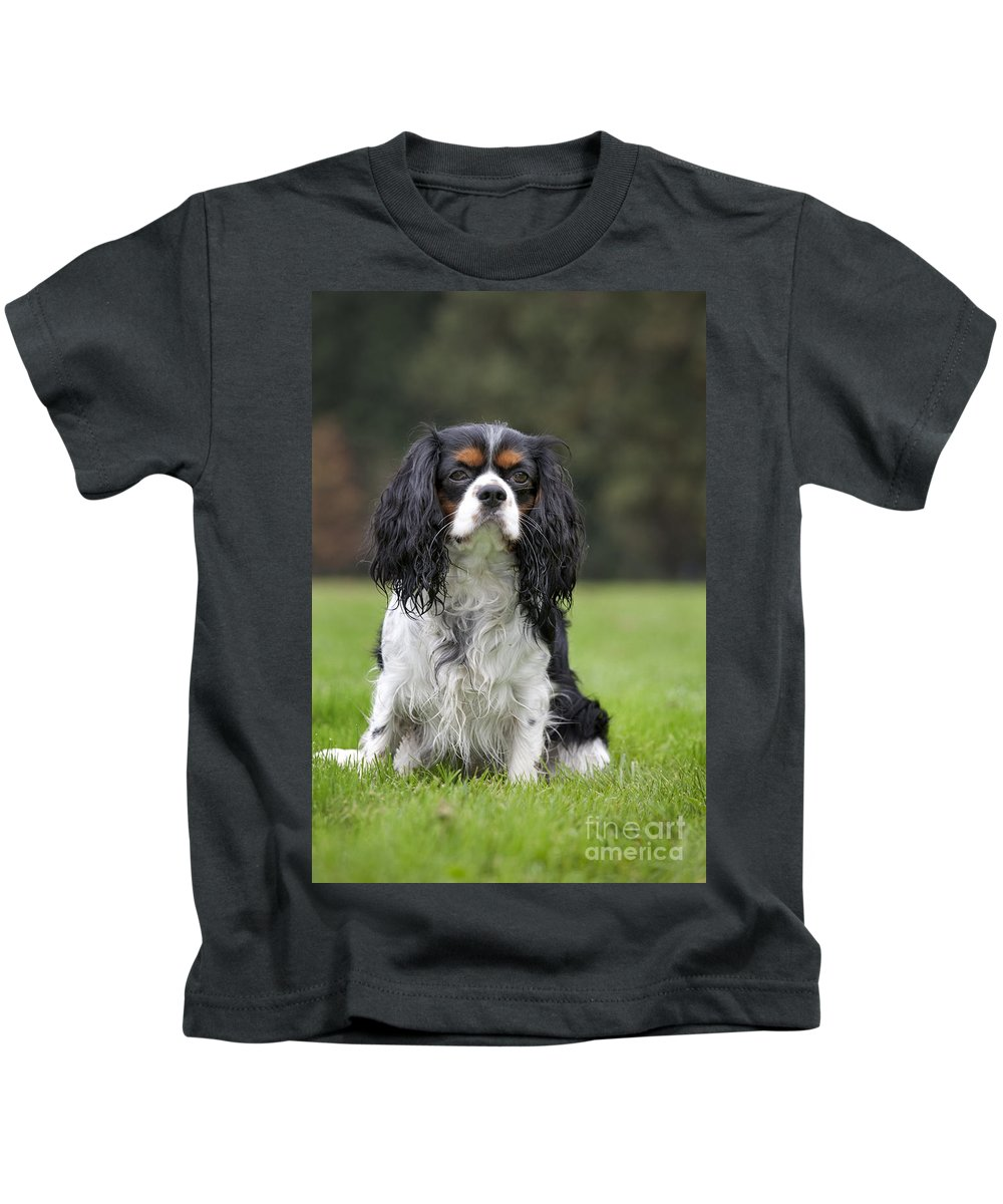 Cavalier King Charles Spaniel Kids T-Shirt featuring the photograph 111216p255 by Arterra Picture Library