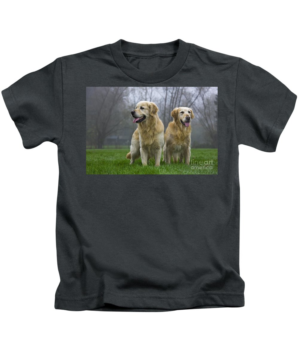 Golden Retriever Kids T-Shirt featuring the photograph 111230p057 by Arterra Picture Library
