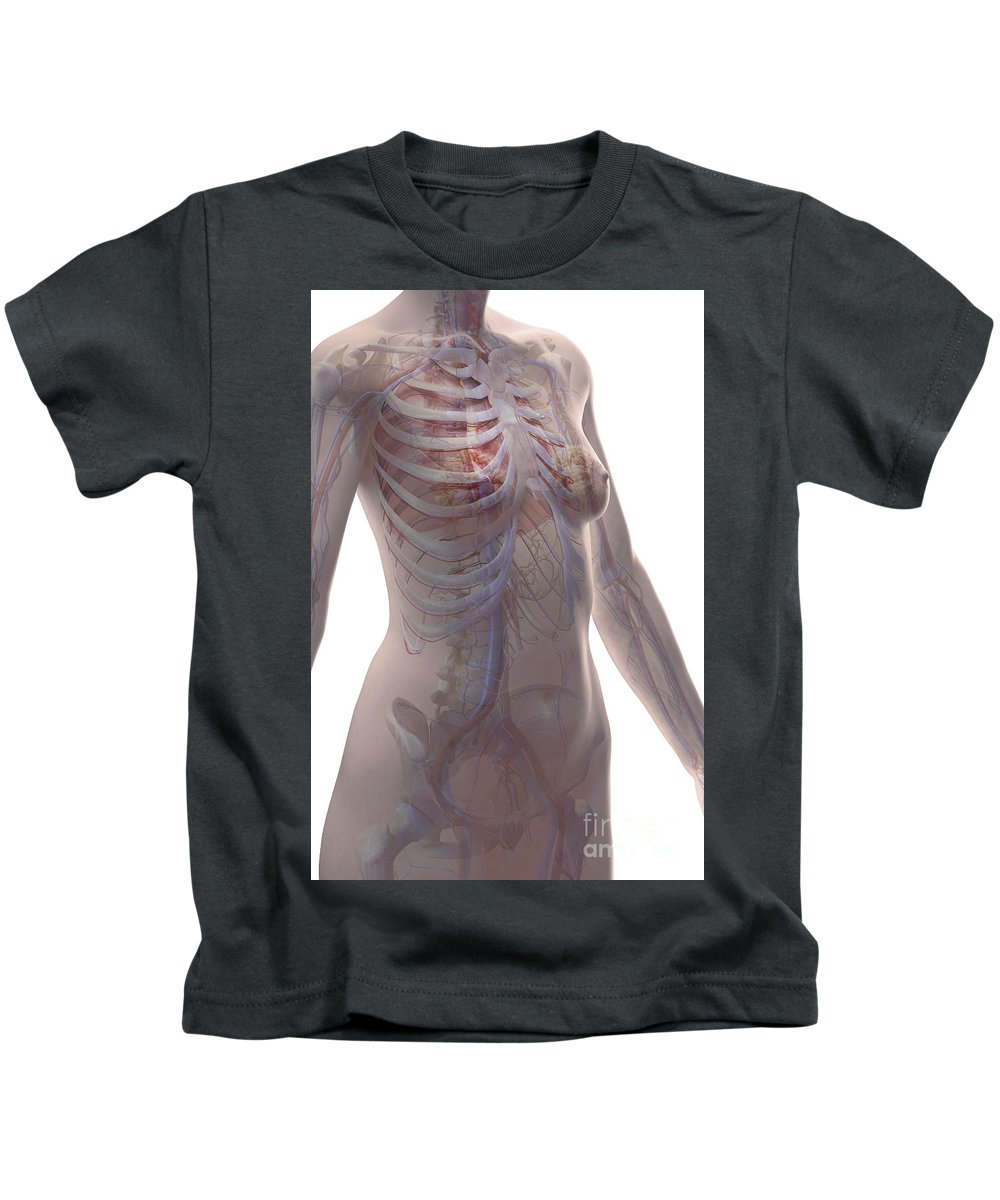 Inferior Vena Cava Kids T-Shirt featuring the photograph The Cardiovascular System Female by Science Picture Co