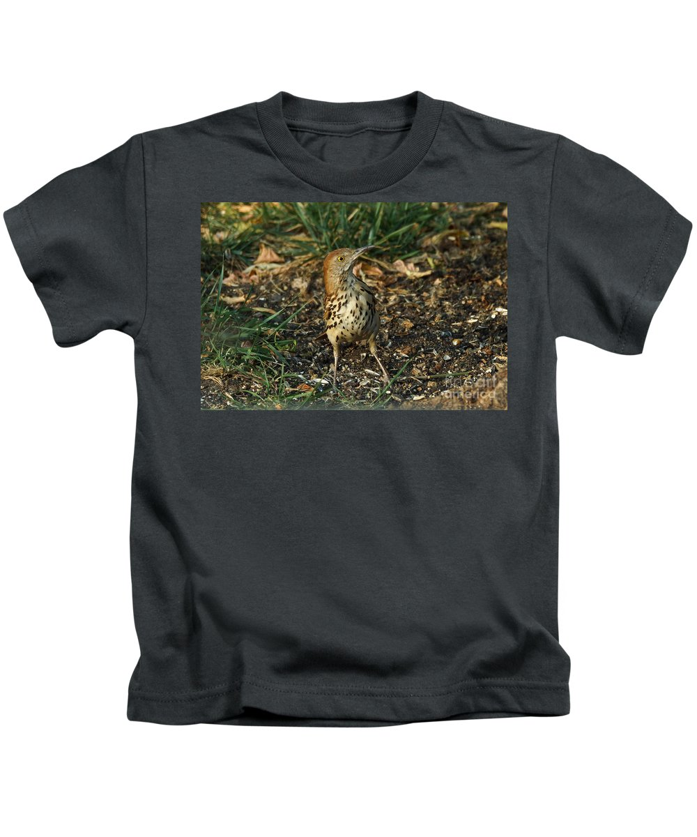 Birds Kids T-Shirt featuring the photograph Brown Thrasher by Lori Tordsen
