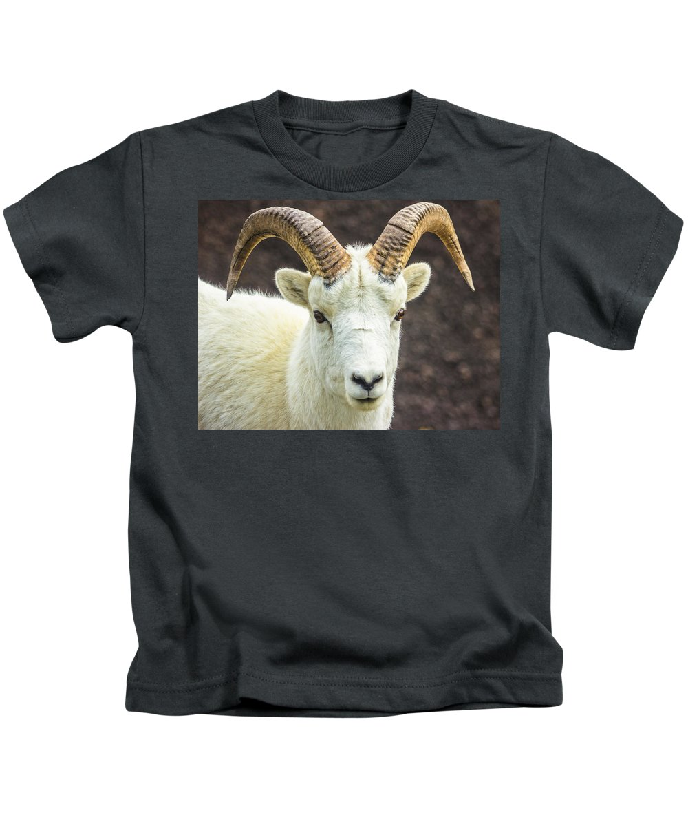 Alaska Kids T-Shirt featuring the photograph Dall Sheep by Kyle Lavey