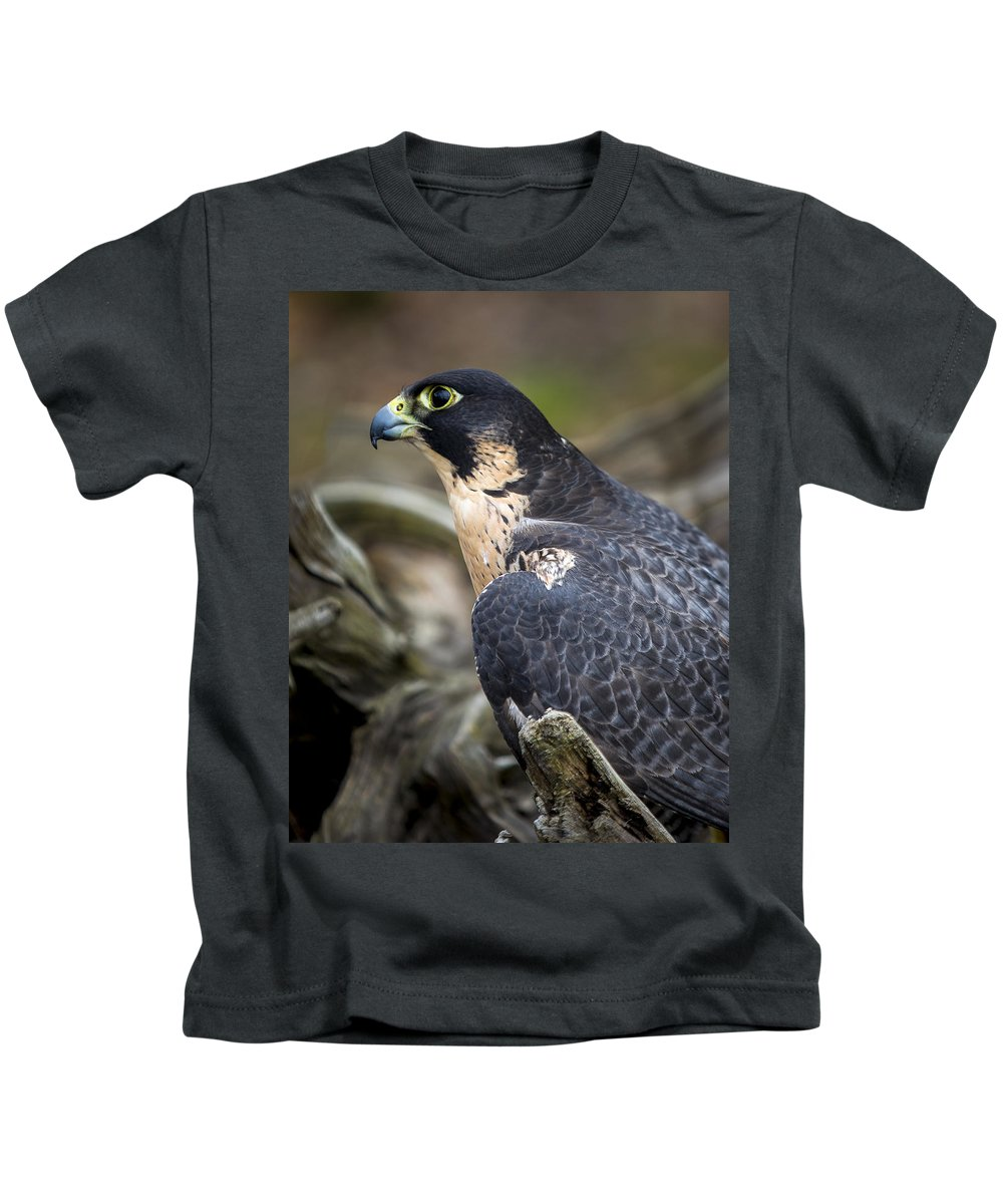 Aerial Kids T-Shirt featuring the photograph Peregrine Falcon by Jack R Perry