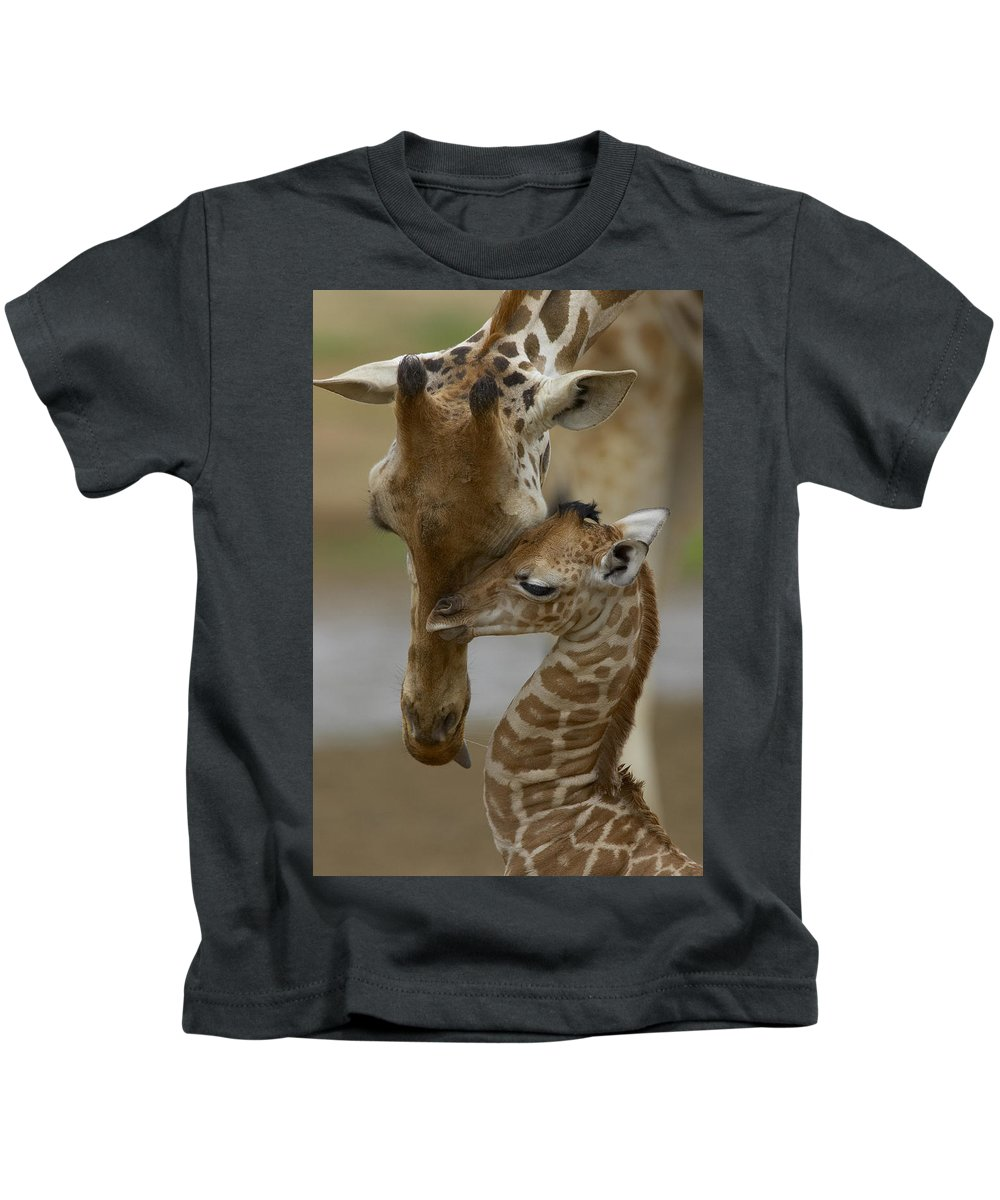 00119300 Kids T-Shirt featuring the photograph Rothschild Giraffes Nuzzling by San Diego Zoo