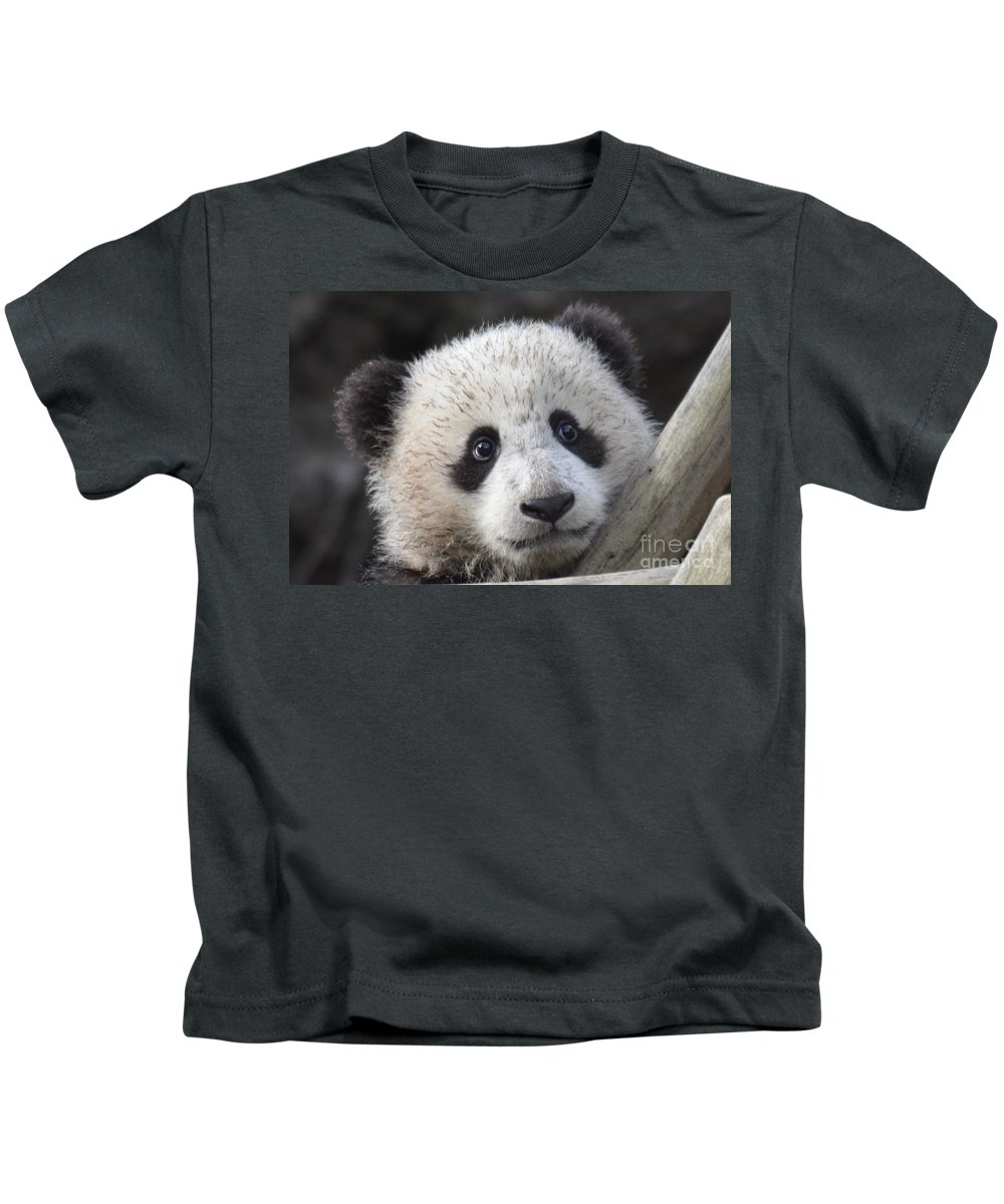 Nature Kids T-Shirt featuring the photograph Baby Giant Panda by Mark Newman