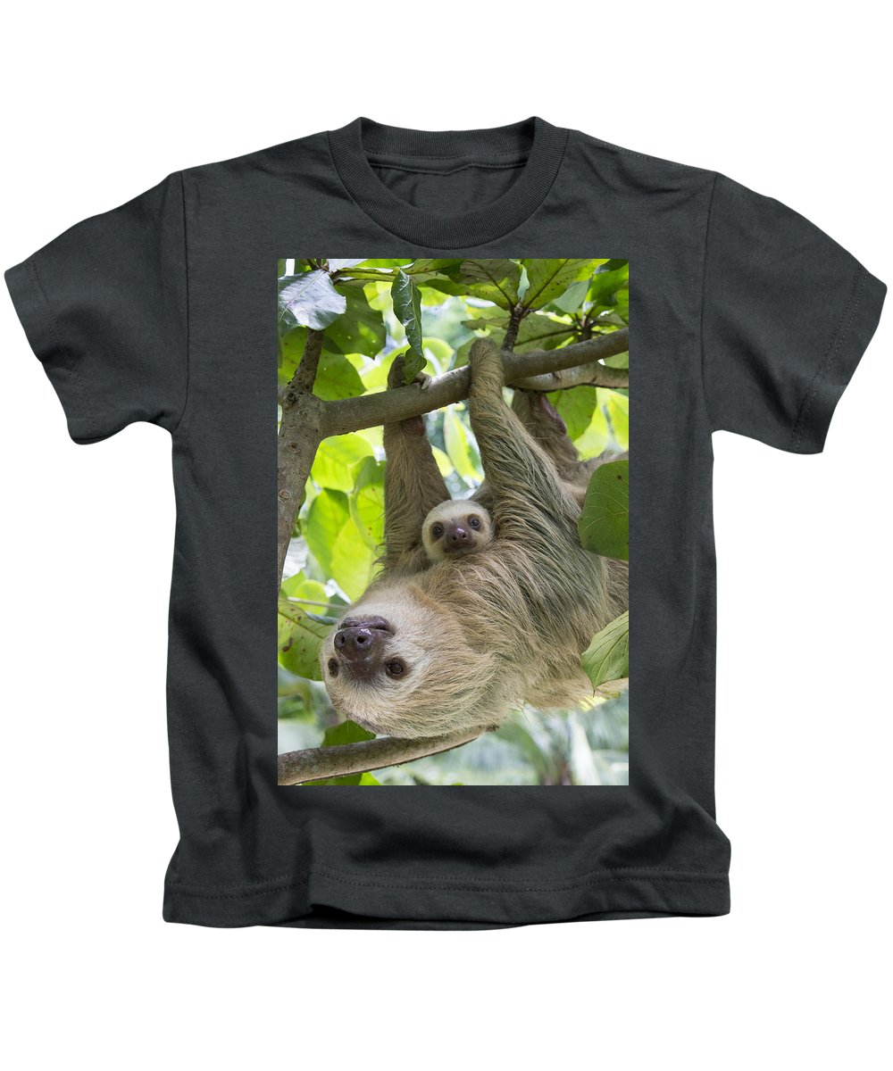 Suzi Eszterhas Kids T-Shirt featuring the photograph Hoffmanns Two-toed Sloth And Old Baby by Suzi Eszterhas