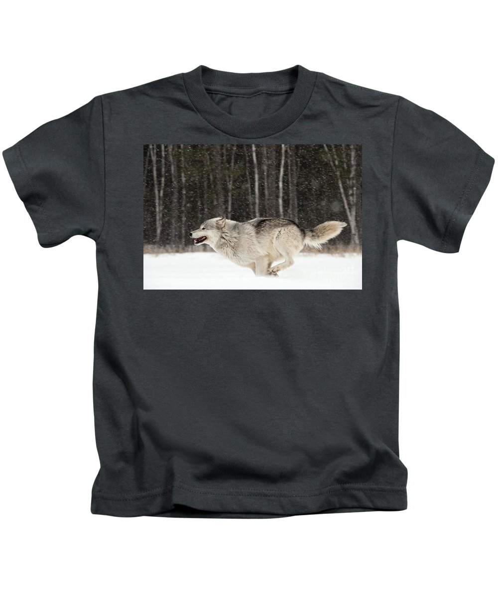 Canis Lupus Kids T-Shirt featuring the photograph Wolf In Winter by John Shaw