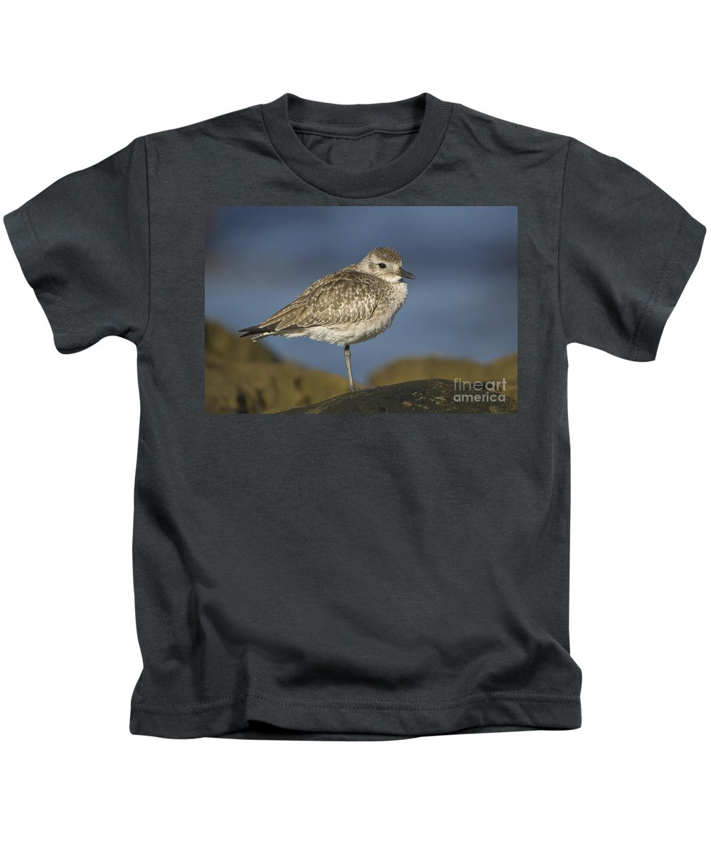Black-bellied Plover Kids T-Shirt featuring the photograph Black-bellied Plover by John Shaw