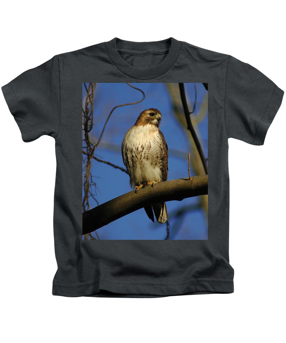 Red Tail Kids T-Shirt featuring the photograph A Red Tail Hawk by Raymond Salani III