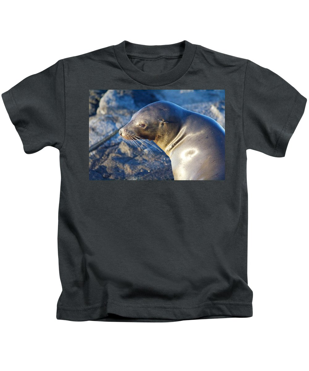 Adorable Kids T-Shirt featuring the photograph Adorable Sealion by Allan Morrison