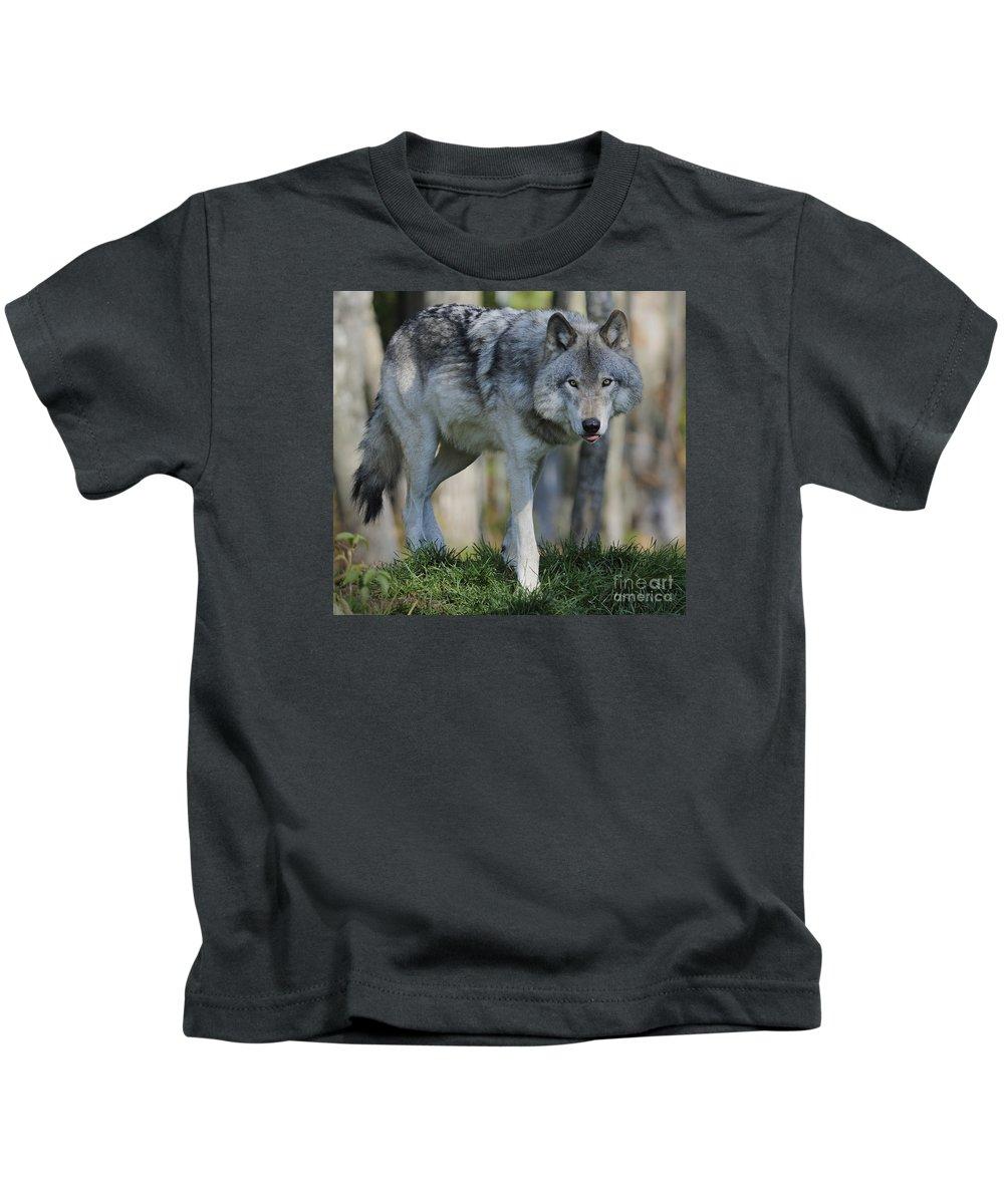 Nina Stavlund Kids T-Shirt featuring the photograph Alpha... by Nina Stavlund