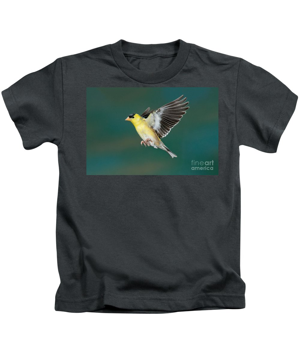 Carduelis Tristis Kids T-Shirt featuring the photograph American Goldfinch Male-flying by Anthony Mercieca