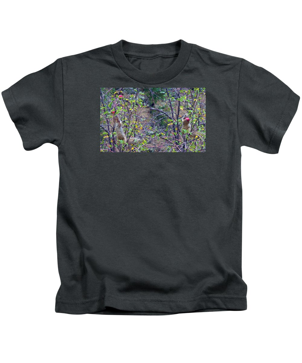 Apple Tree Nature Suirrel Animals Autumn Fall Colorado Rocky Mountains Kids T-Shirt featuring the photograph Apple Thief by George Tuffy