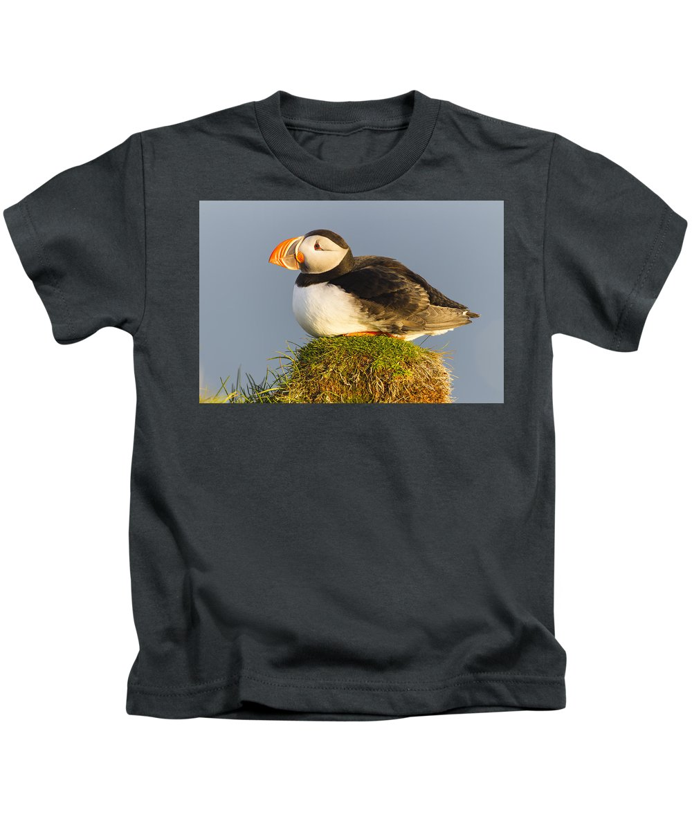 Nis Kids T-Shirt featuring the photograph Atlantic Puffin Iceland by Peer von Wahl
