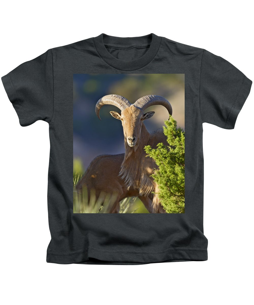Barbary Kids T-Shirt featuring the photograph Auodad Ram On Watch by Gary Langley