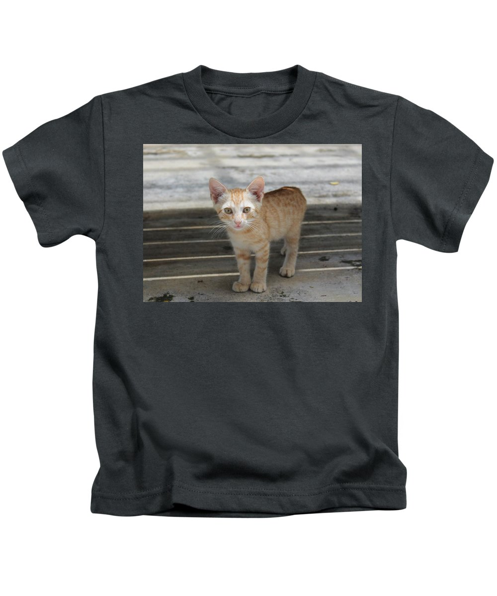 Orange Kids T-Shirt featuring the photograph Baby Kitty by Catie Canetti
