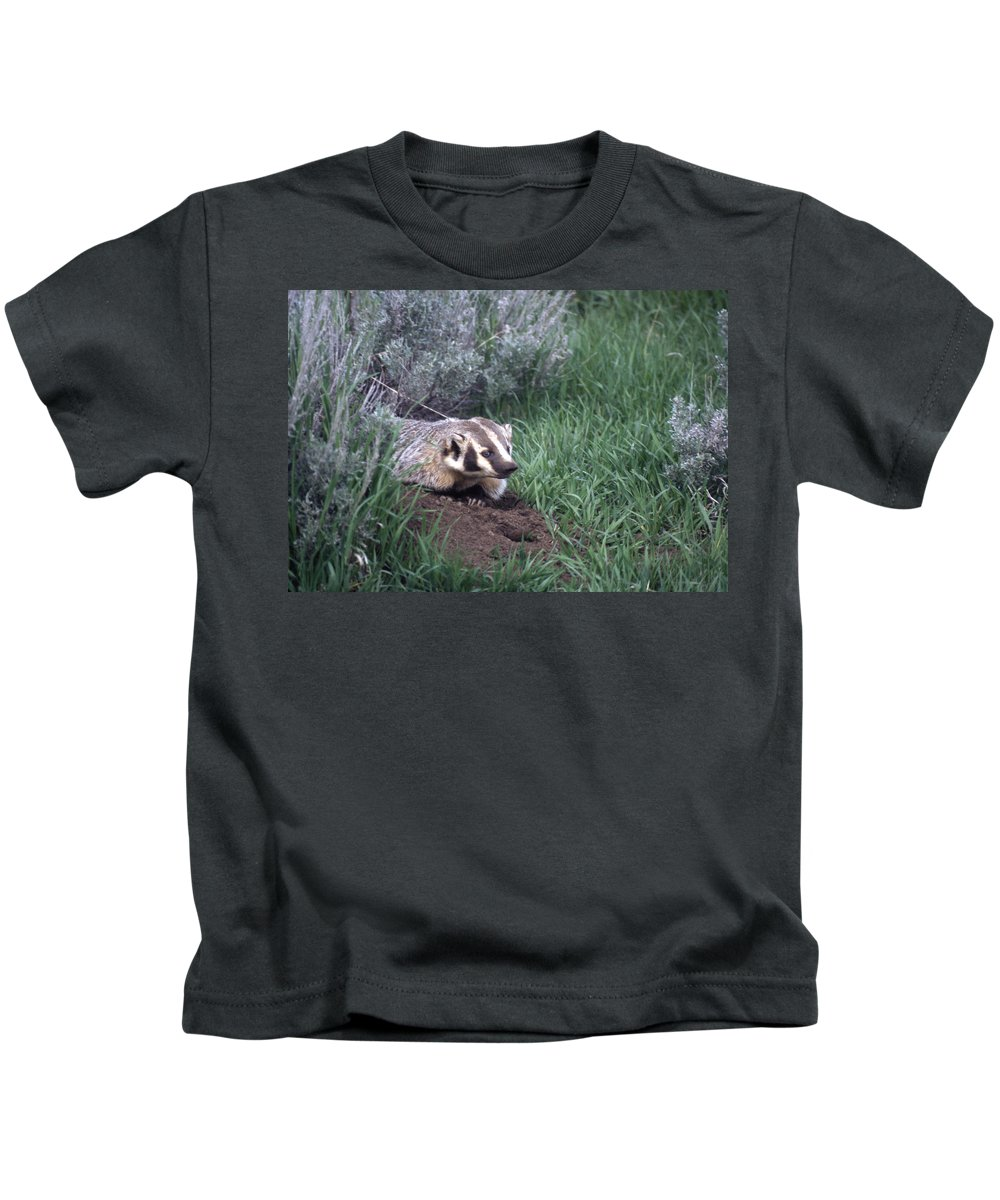 Badger Kids T-Shirt featuring the photograph Badger In Yellowstone by Ed Cooper Photography