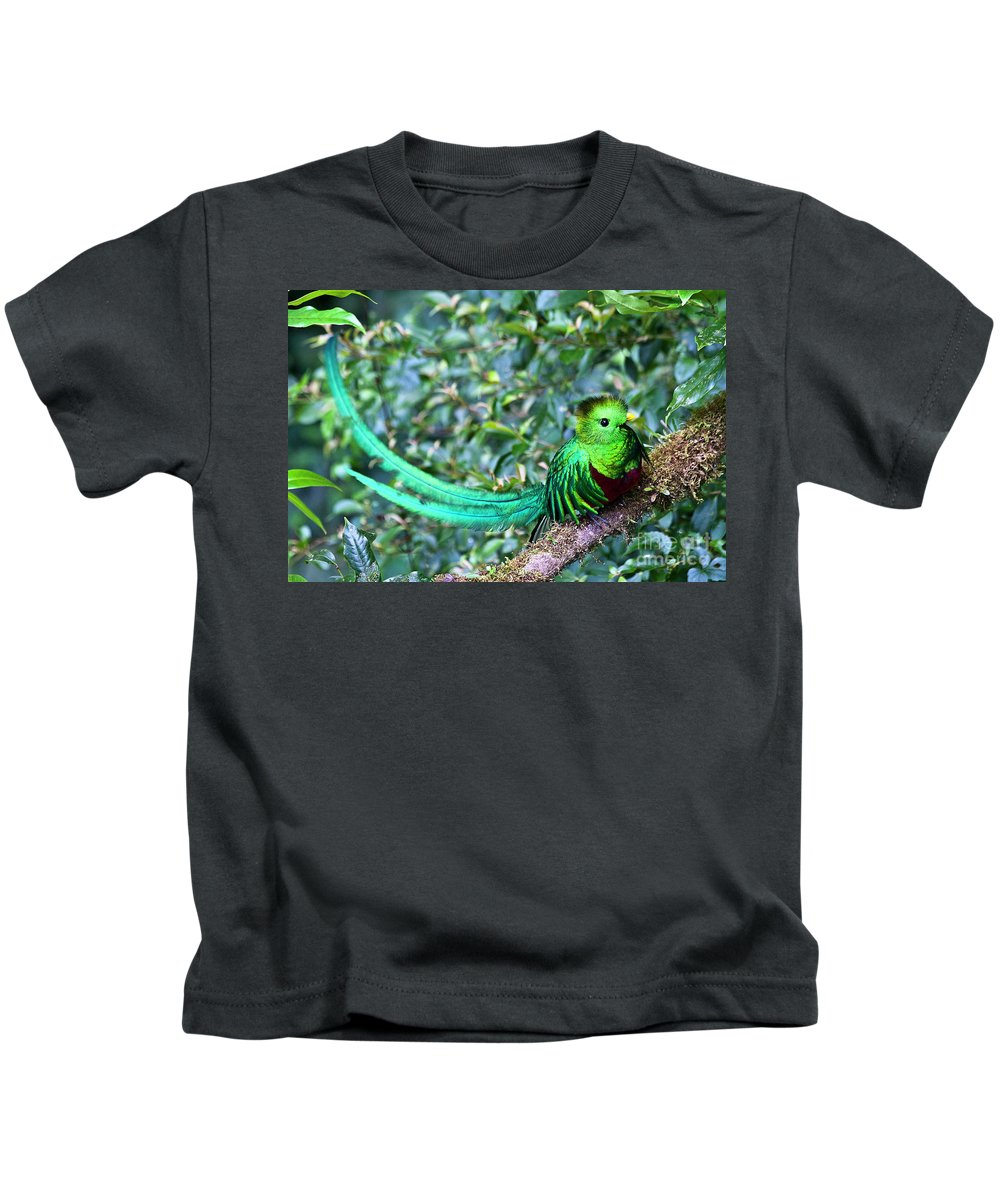 Bird Kids T-Shirt featuring the photograph Beautiful Quetzal 3 by Heiko Koehrer-Wagner