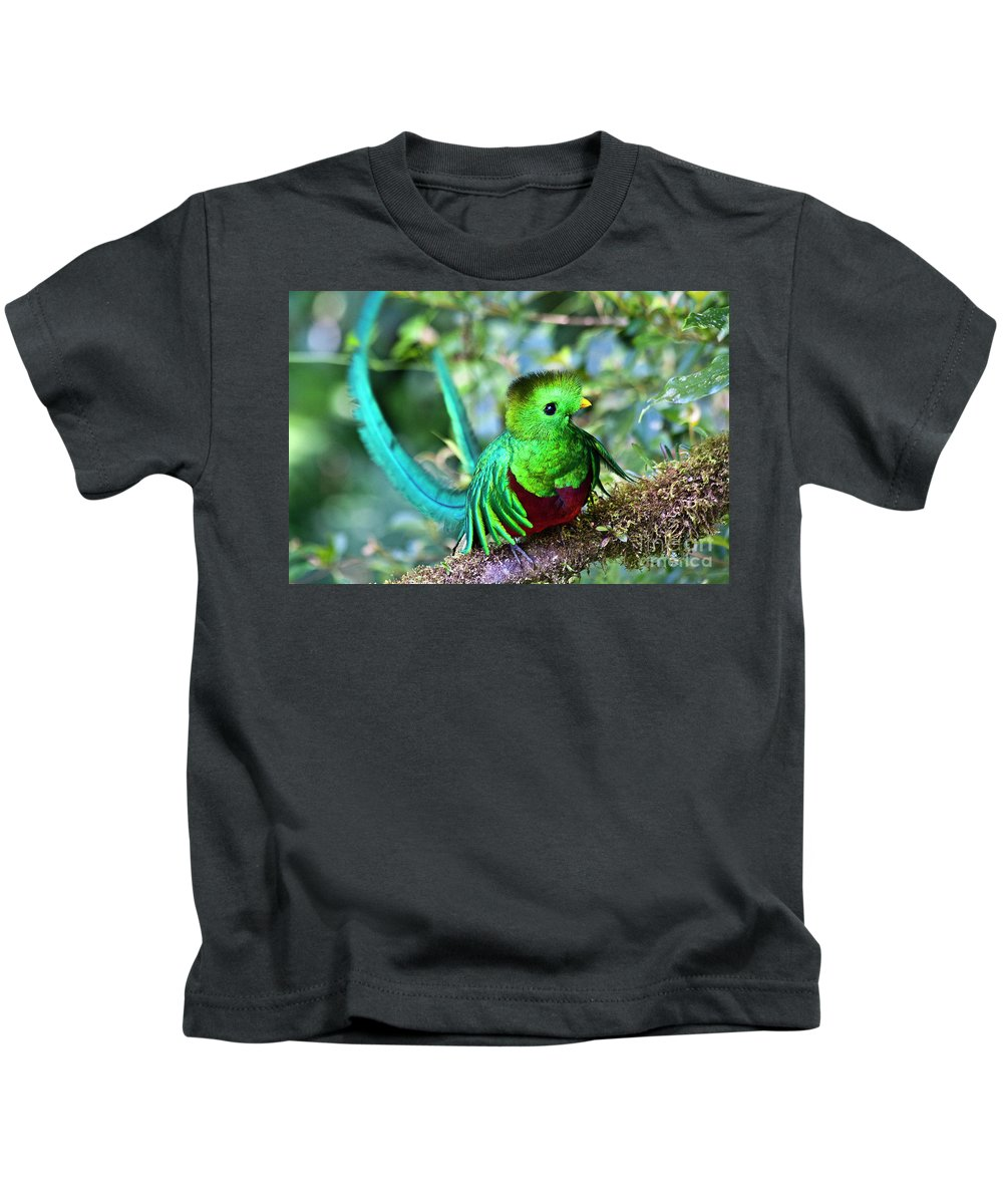 Bird Kids T-Shirt featuring the photograph Beautiful Quetzal 5 by Heiko Koehrer-Wagner