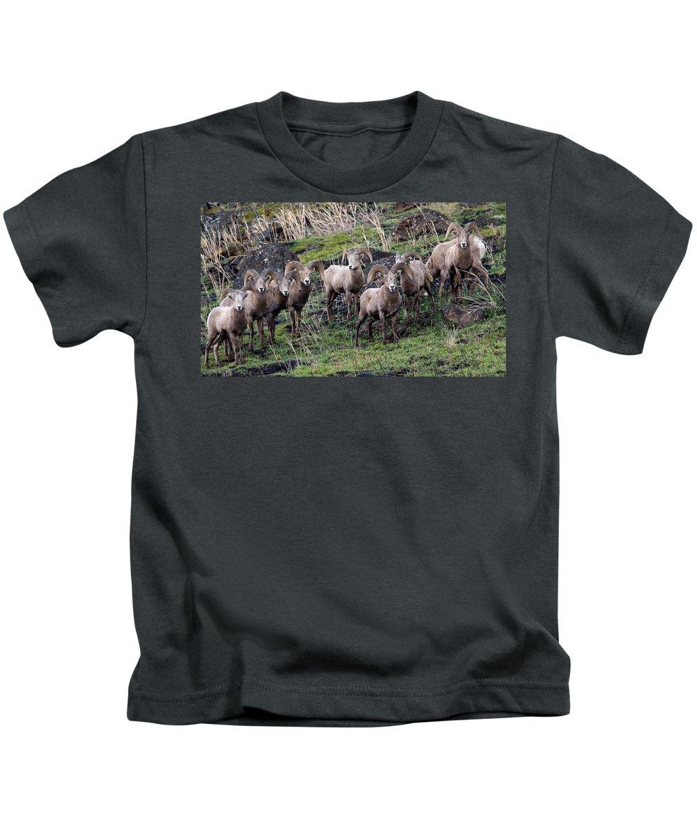 Bighorn Sheep Kids T-Shirt featuring the photograph Bighorn Reunion by Steve McKinzie