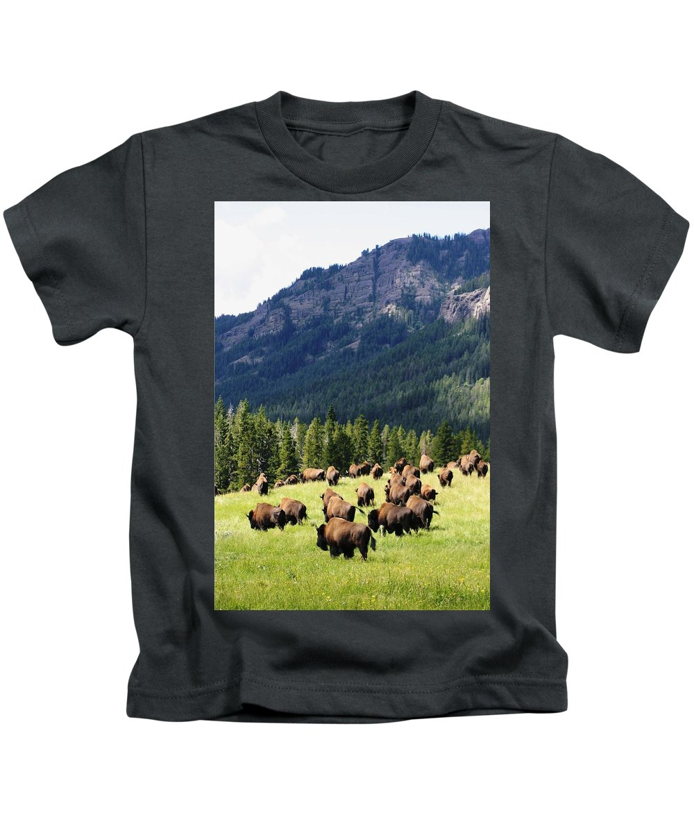Bison Herd In Soda Butte Creek Yellowstone National Park Kids T-Shirt featuring the photograph Bison Valley by Michael Cressy