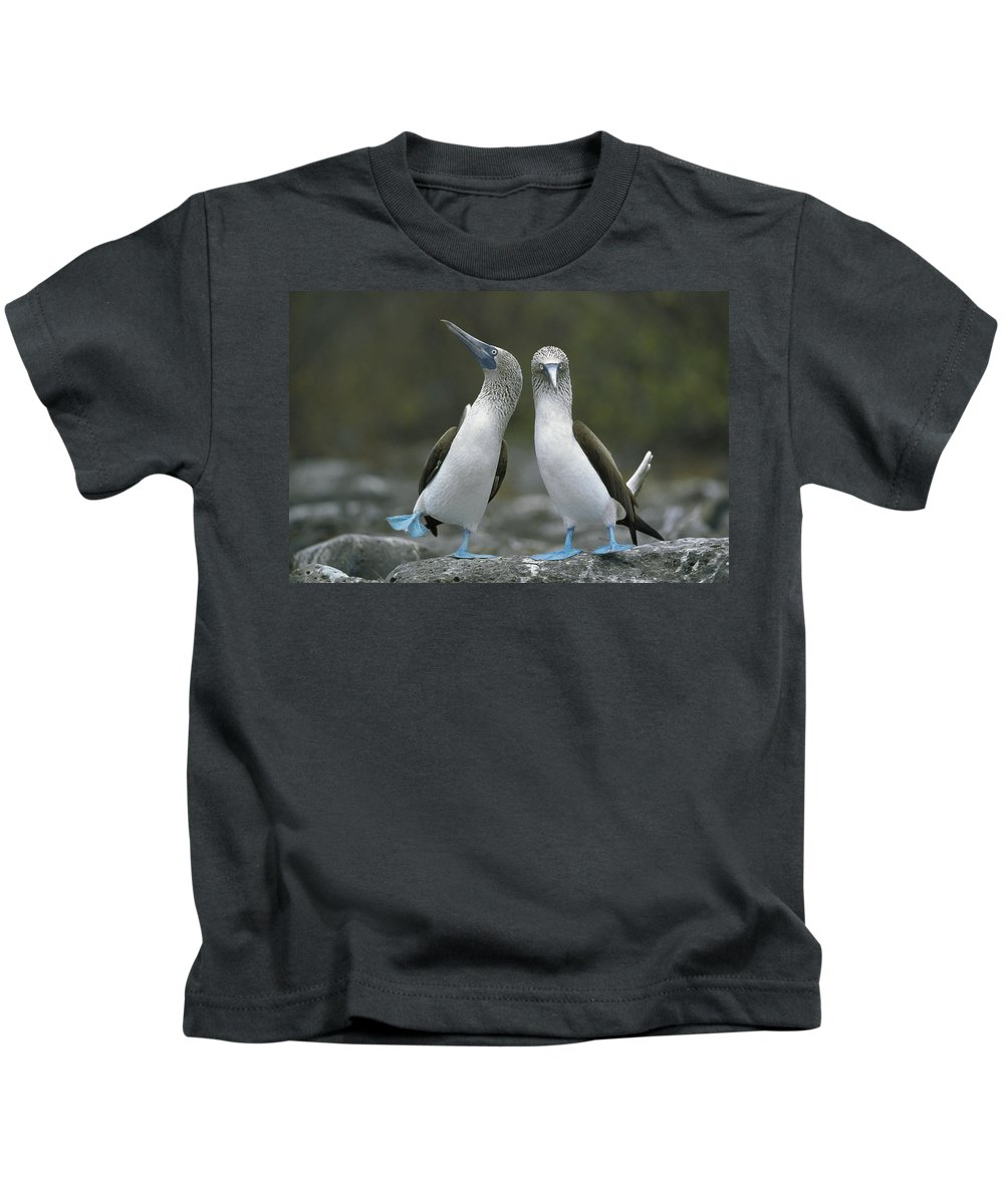 00141144 Kids T-Shirt featuring the photograph Blue Footed Booby Dancing by Tui De Roy