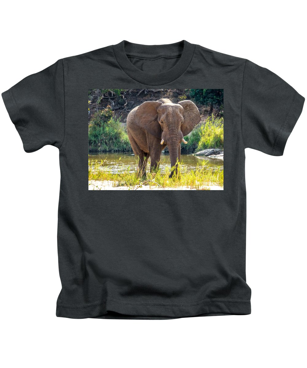South Africa Kids T-Shirt featuring the photograph Brilliant Elephant by DAC Photography