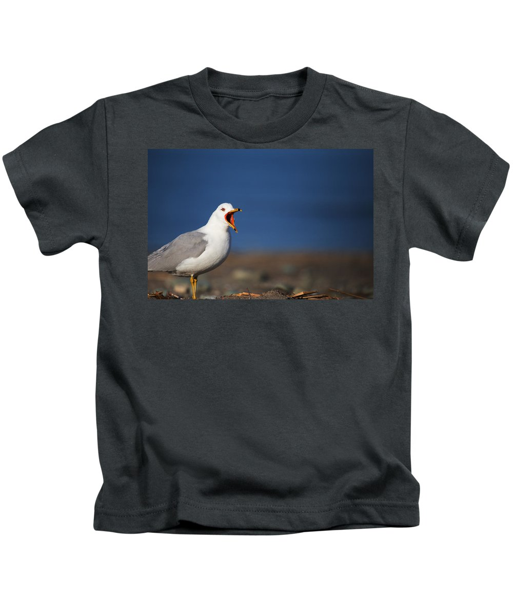 Gull Kids T-Shirt featuring the photograph Calling All Gulls by Karol Livote