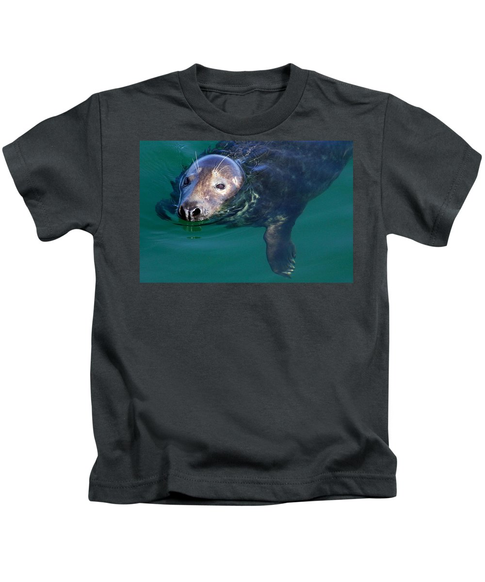 Seal Kids T-Shirt featuring the photograph Chatham Harbor Seal by Stuart Litoff