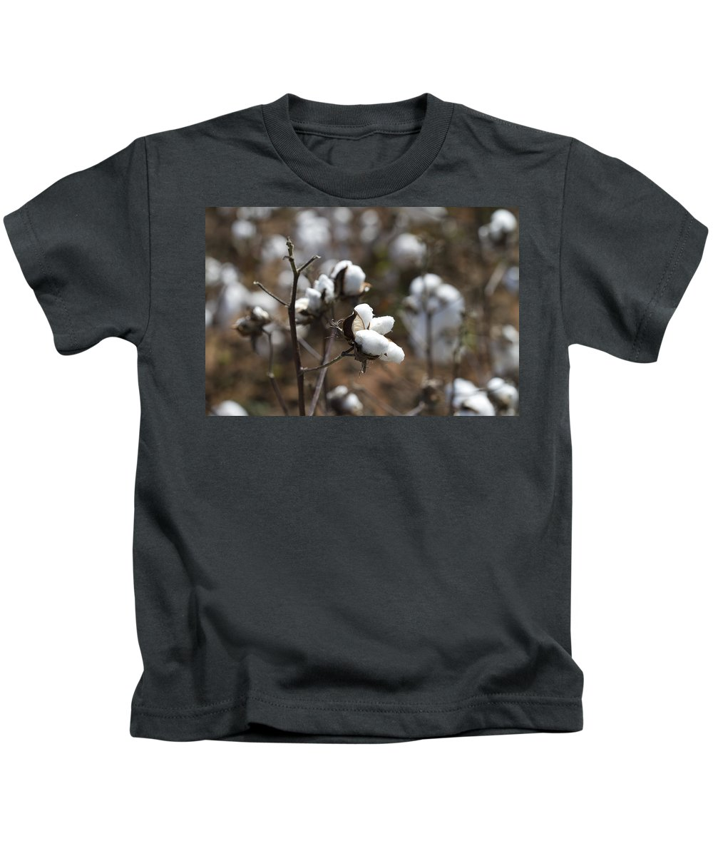 Cotton Kids T-Shirt featuring the photograph Cotton Southern Gold by Kathy Clark