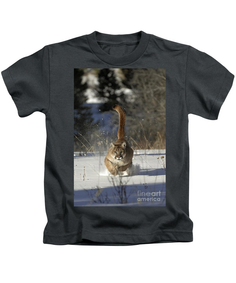 Mountain Lion Kids T-Shirt featuring the photograph Countdown by Wildlife Fine Art