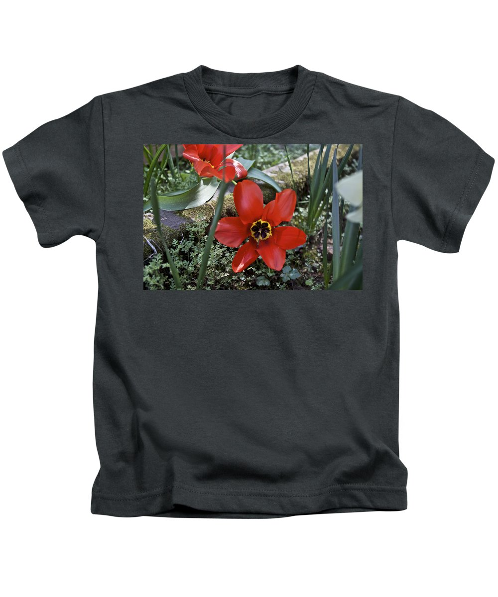 Amador Kids T-Shirt featuring the photograph Fosteriana Tulips Red Emperors by SC Heffner