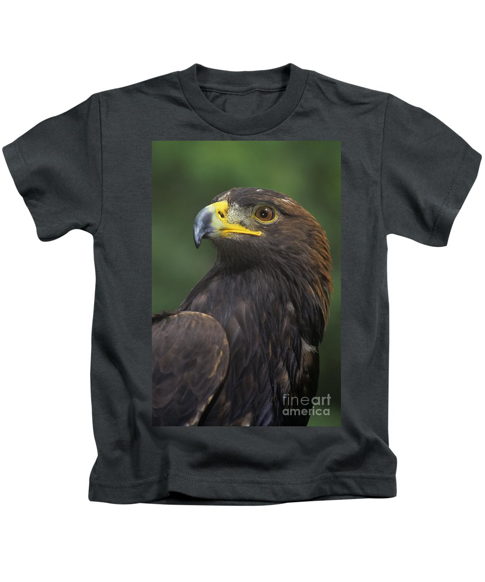 Golden Eagle Kids T-Shirt featuring the photograph Golden Eagle Portrait Threatened Species Wildlife Rescue by Dave Welling