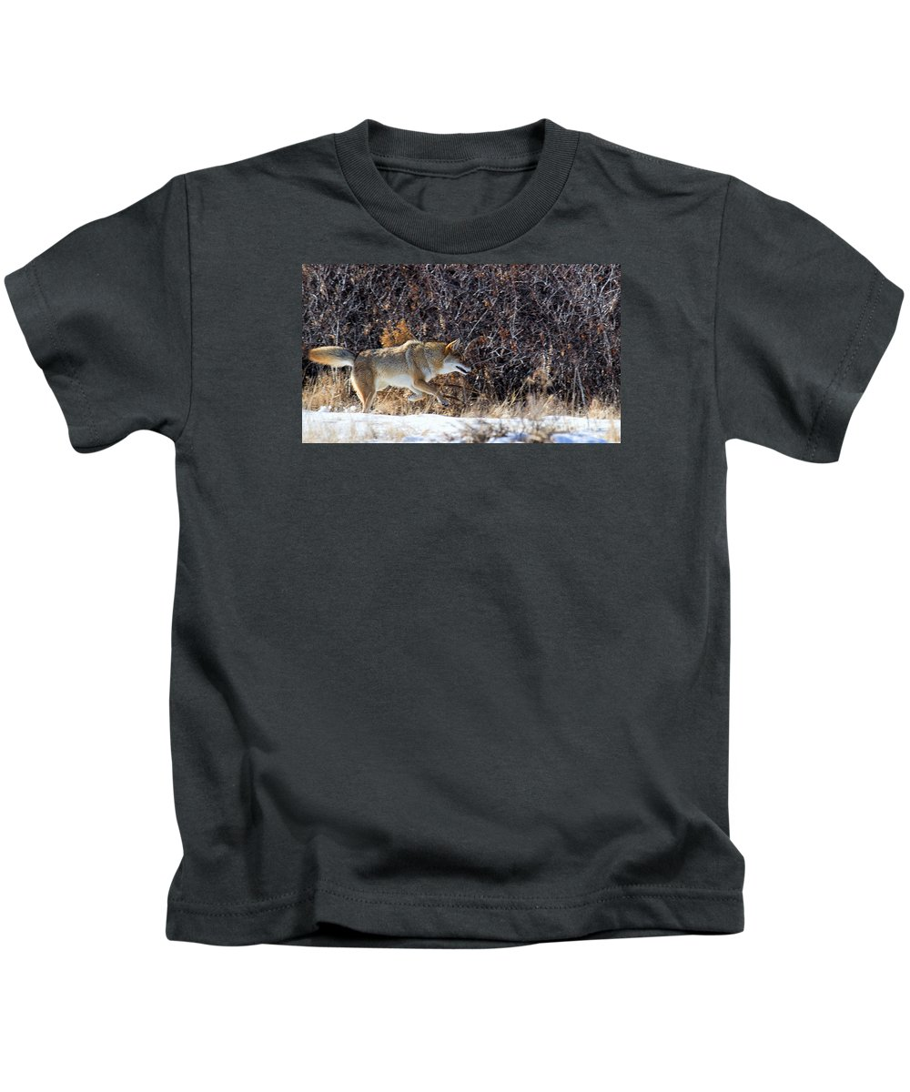 Coyote Kids T-Shirt featuring the photograph Hide Your Piggies by Jim Garrison