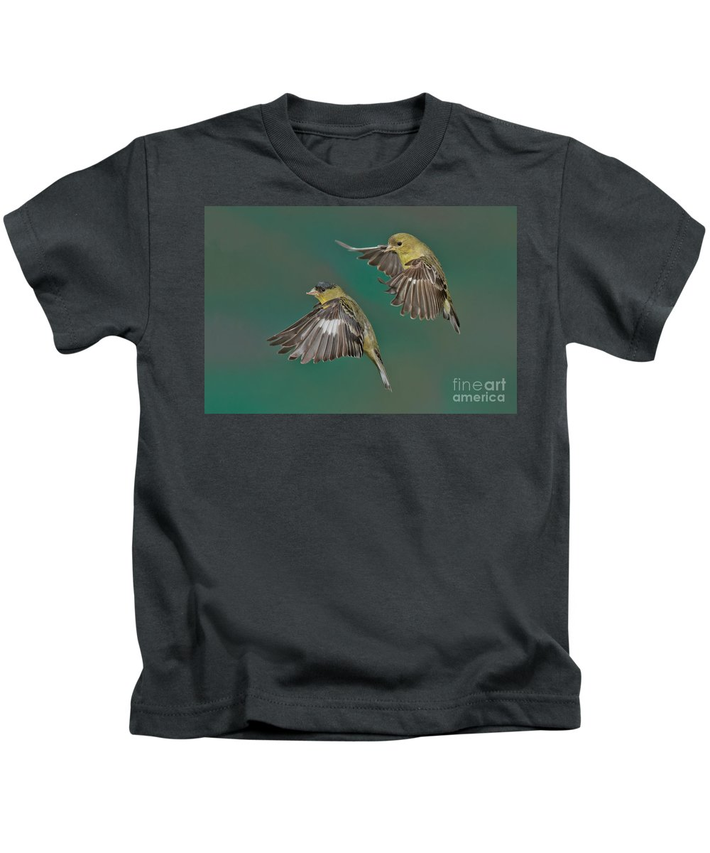 Lesser Goldfinch Kids T-Shirt featuring the photograph Lesser Goldfinch Pair In The Air by Anthony Mercieca