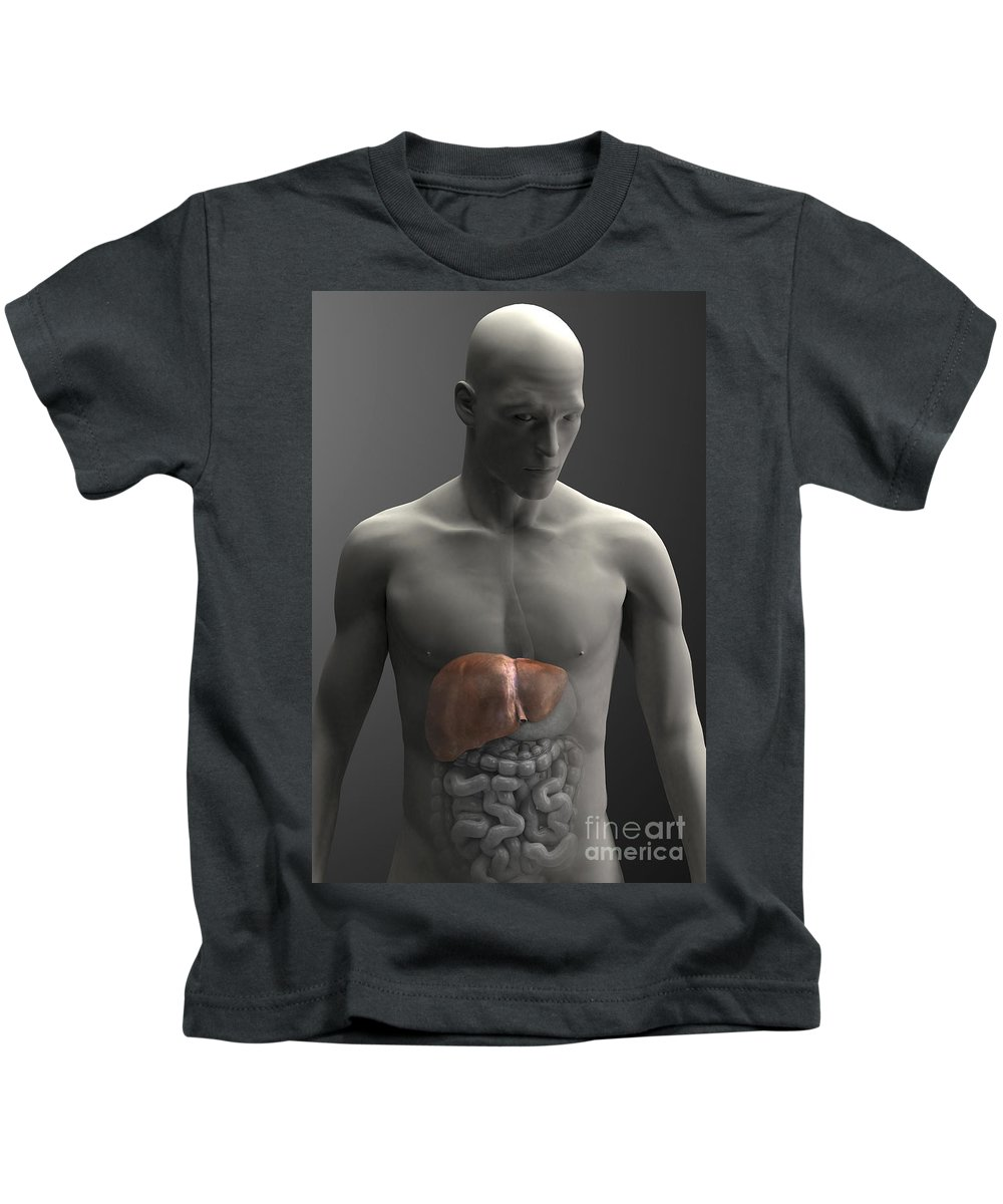 Internal Organs Kids T-Shirt featuring the photograph Liver Male by Science Picture Co