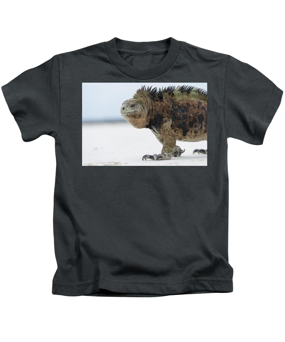 Tui De Roy Kids T-Shirt featuring the photograph Marine Iguana Male Turtle Bay Santa by Tui De Roy