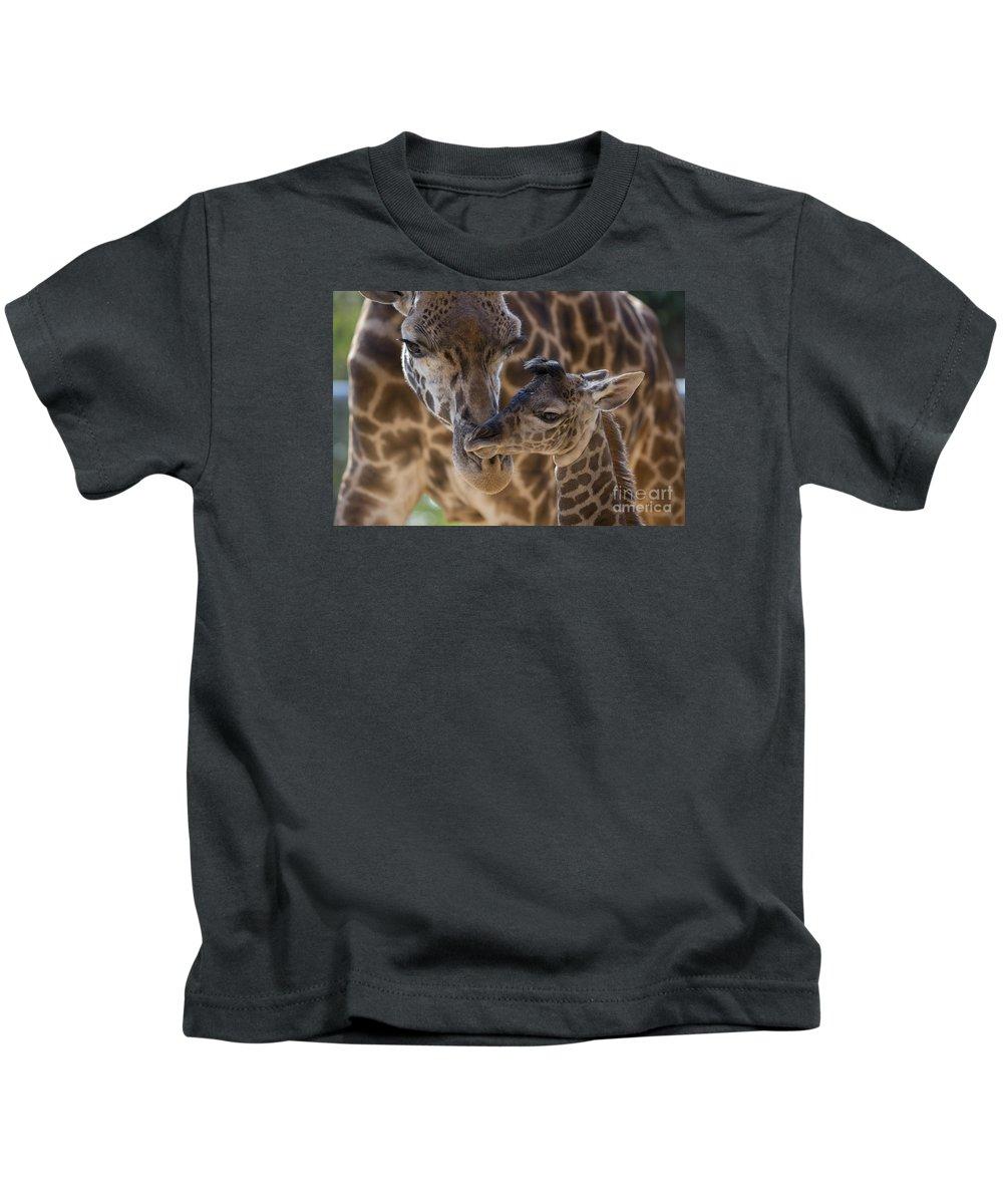 San Diego Zoo Kids T-Shirt featuring the photograph Masai Giraffe And Calf by San Diego Zoo