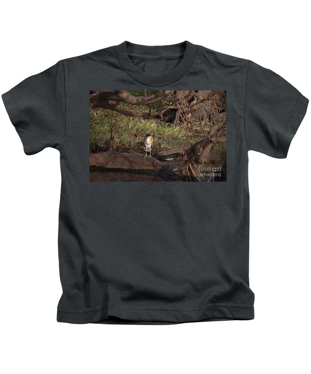 Night Heron Kids T-Shirt featuring the photograph Night Heron At Corroboree Billabong by Douglas Barnard