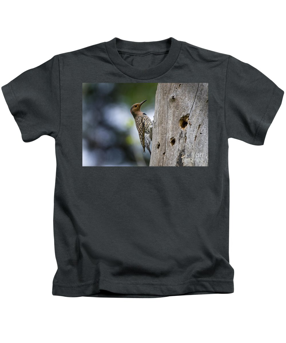 Northern Flicker Kids T-Shirt featuring the photograph Northern Flicker Pictures 35 by World Wildlife Photography