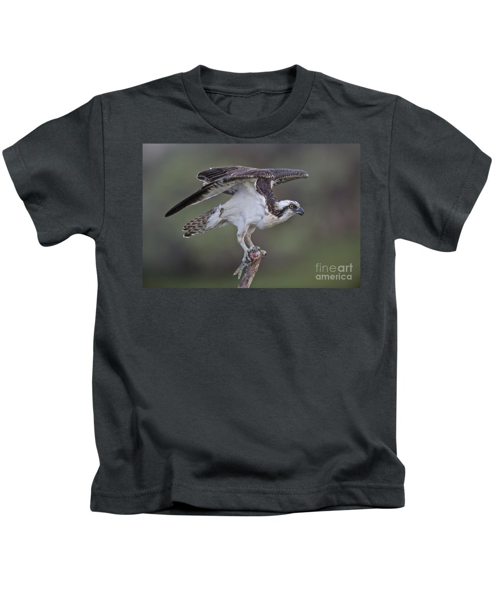 Osprey Kids T-Shirt featuring the photograph Osprey With Fish by Anthony Mercieca