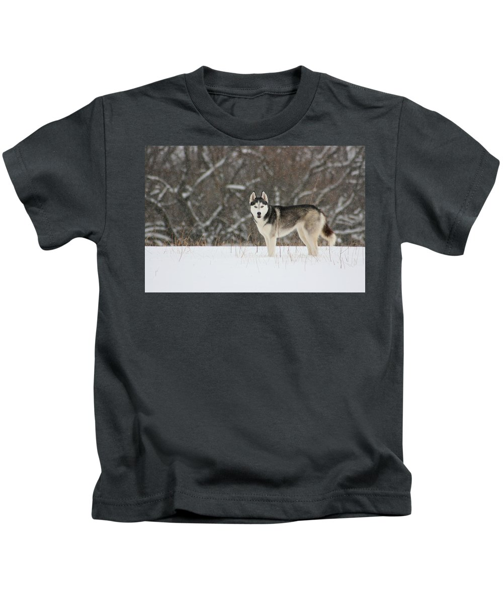 Landscape Kids T-Shirt featuring the photograph Siberian Husky 20 by David Dunham