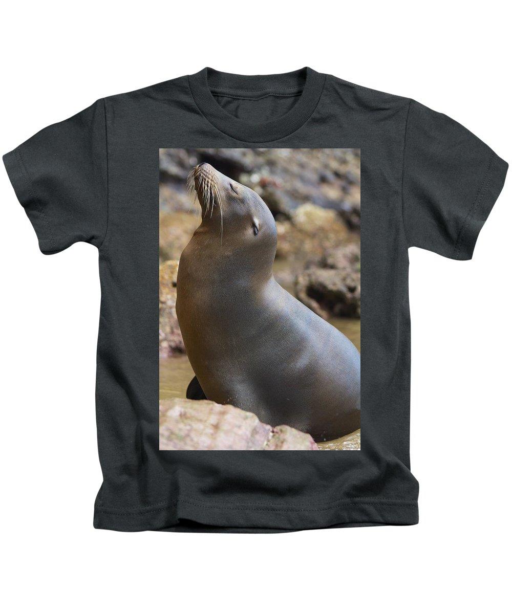 Triumphant Sealion Kids T-Shirt featuring the photograph Ta Da by Allan Morrison