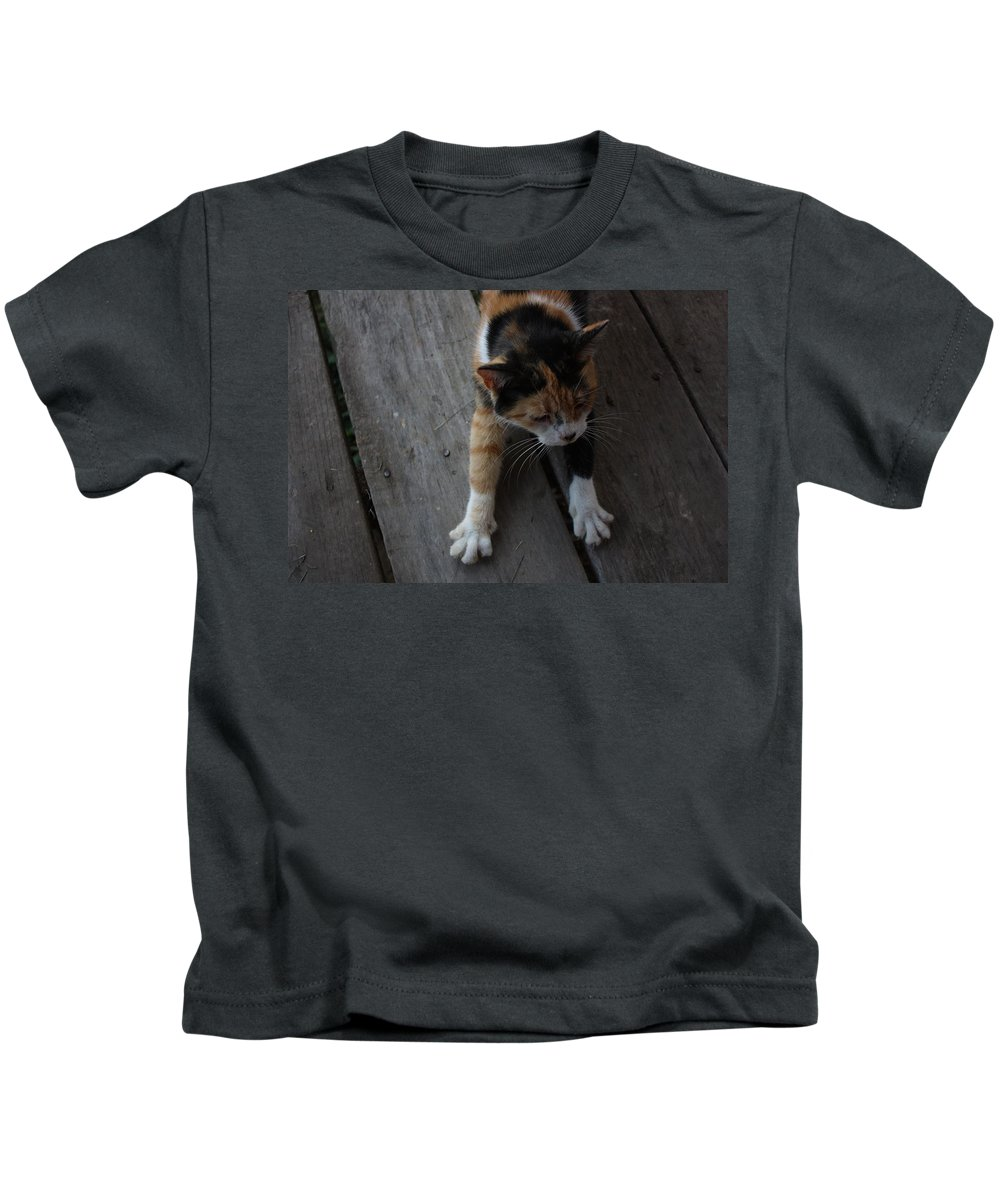 Calico Cat Kids T-Shirt featuring the photograph The Morning Stretch by Josh Brown