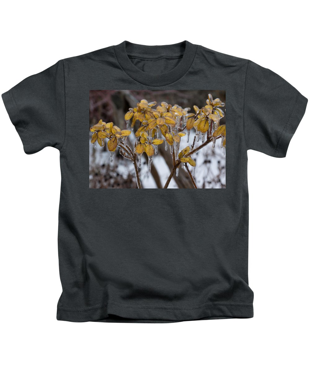 Toronto Ice Storm 2013 Kids T-Shirt featuring the photograph Toronto Ice Storm 2013 - My Garden In The Morning by Georgia Mizuleva