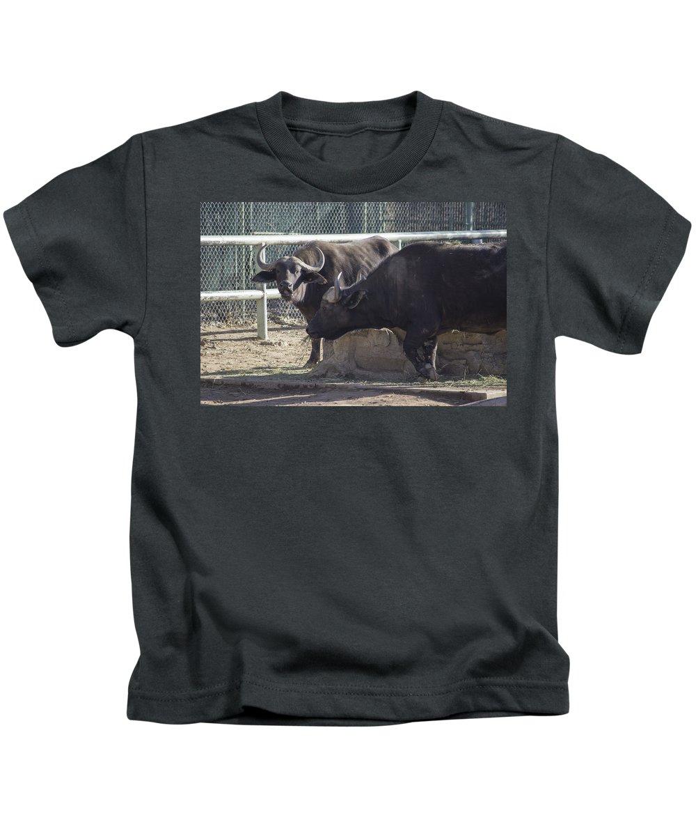 Water Buffalo Kids T-Shirt featuring the photograph Water Buffalo - 2 by Becca Buecher