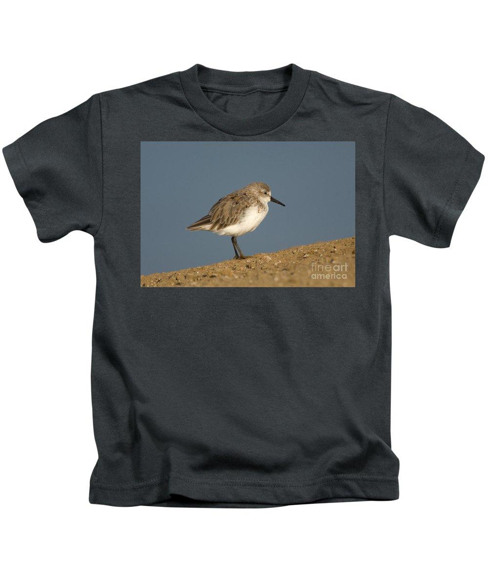 Fauna Kids T-Shirt featuring the photograph Western Sandpiper Calidris Mauri by Anthony Mercieca